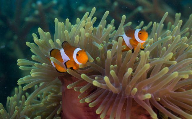 Rawa Island Diving
